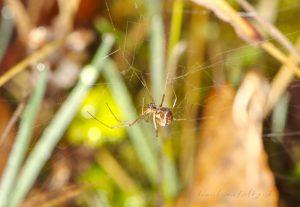 spider 152-166