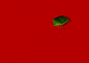 bug-update-18-04-2020