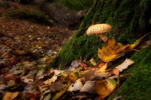 mushroom - 20-10-2019