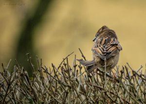 sparrow-18-02-2020
